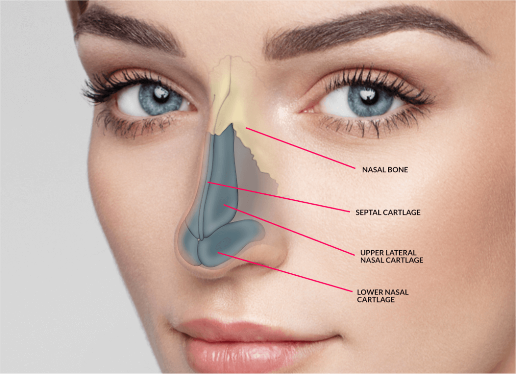How Much Does a Nose Job Cost Rhinoplasty - plasticsurgerystore.com